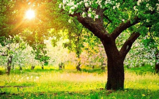 summer sun through trees